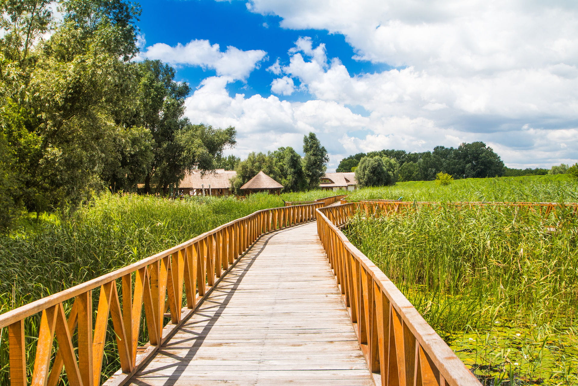 High quality hoto of Kopacki Rit Nature Park - Croatia